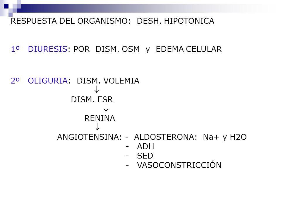 RESPUESTA DEL ORGANISMO: DESH. HIPOTONICA 1º DIURESIS: POR DISM. OSM y EDEMA CELULAR 2º OLIGURIA: DISM. VOLEMIA DISM. FSR RENINA ANGIOTENSINA: - ALDOS