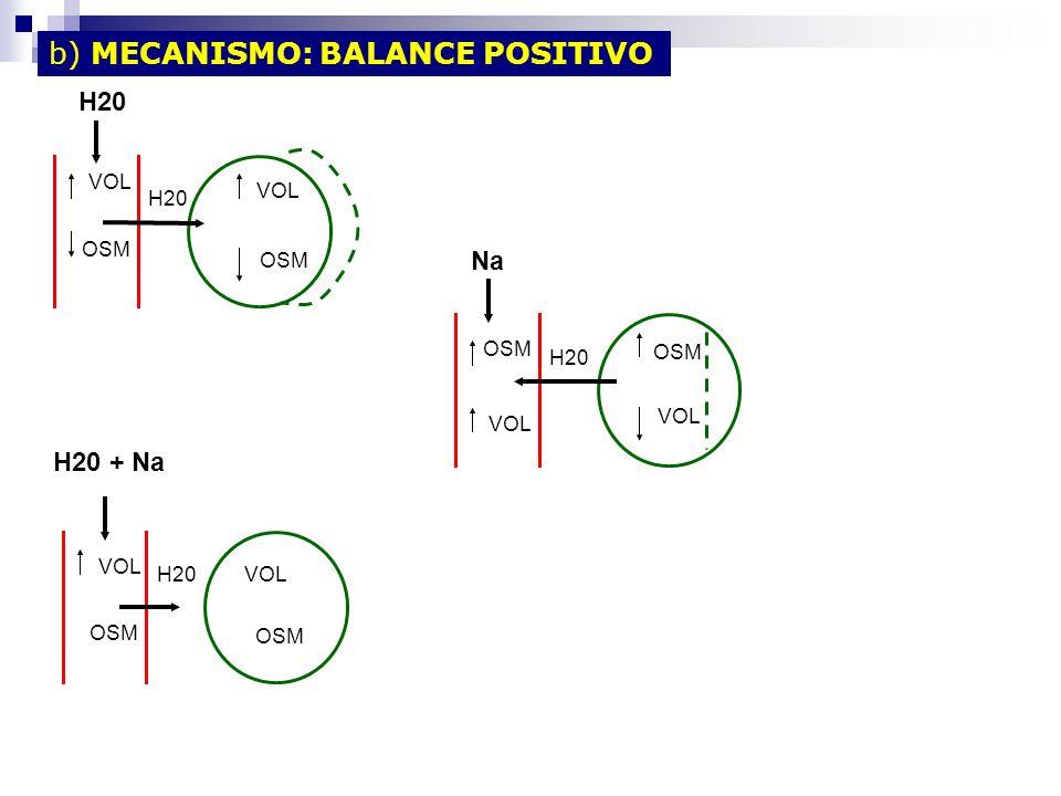 b) MECANISMO: BALANCE POSITIVO VOL OSM VOL OSM H20 VOL OSM H20 OSM VOL OSM H20 OSM VOL H20 Na H20 + Na