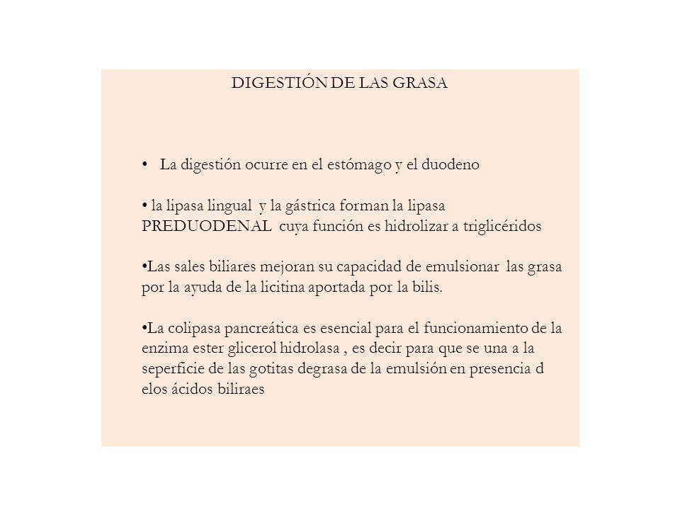 DIGESTIÓN DE LAS GRASA La digestión ocurre en el estómago y el duodeno la lipasa lingual y la gástrica forman la lipasa PREDUODENAL cuya función es hi