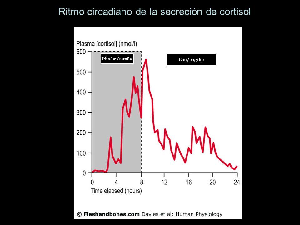 Ritmo circadiano de la secreción de cortisol Noche/sueño Día/ vigilia