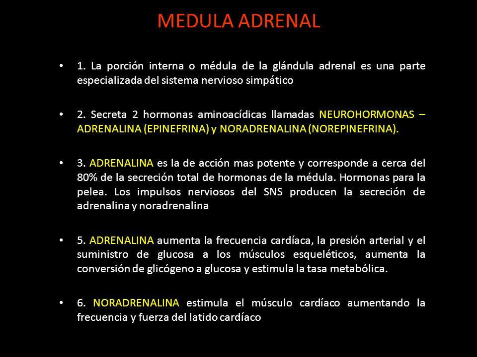 MEDULA ADRENAL 1. La porción interna o médula de la glándula adrenal es una parte especializada del sistema nervioso simpático 2. Secreta 2 hormonas a
