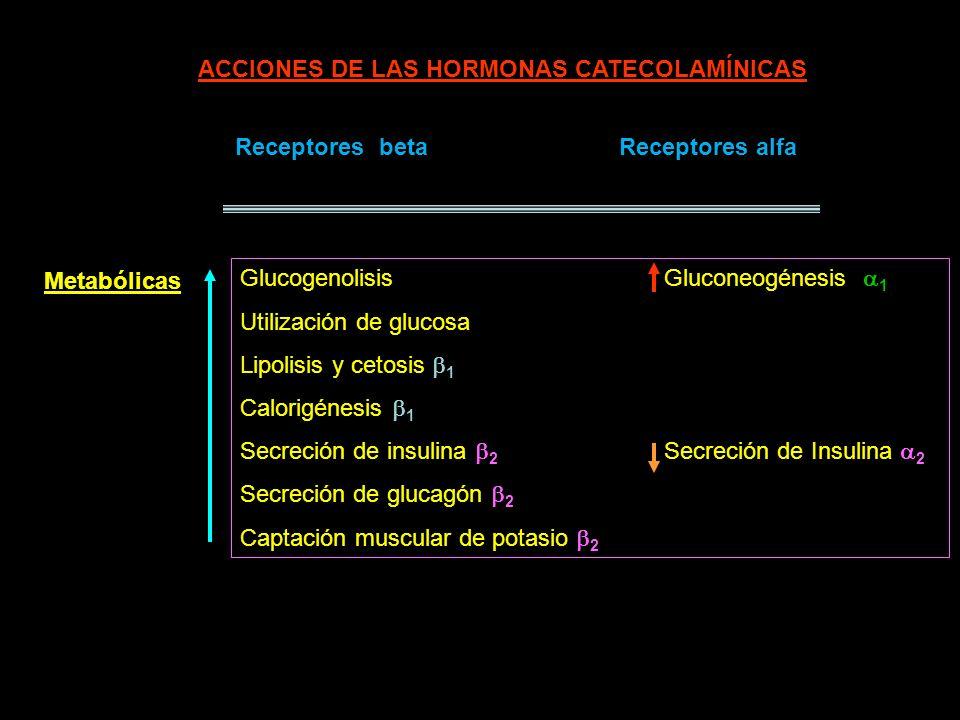 ACCIONES DE LAS HORMONAS CATECOLAMÍNICAS Receptores betaReceptores alfa Glucogenolisis Gluconeogénesis 1 Utilización de glucosa Lipolisis y cetosis 1