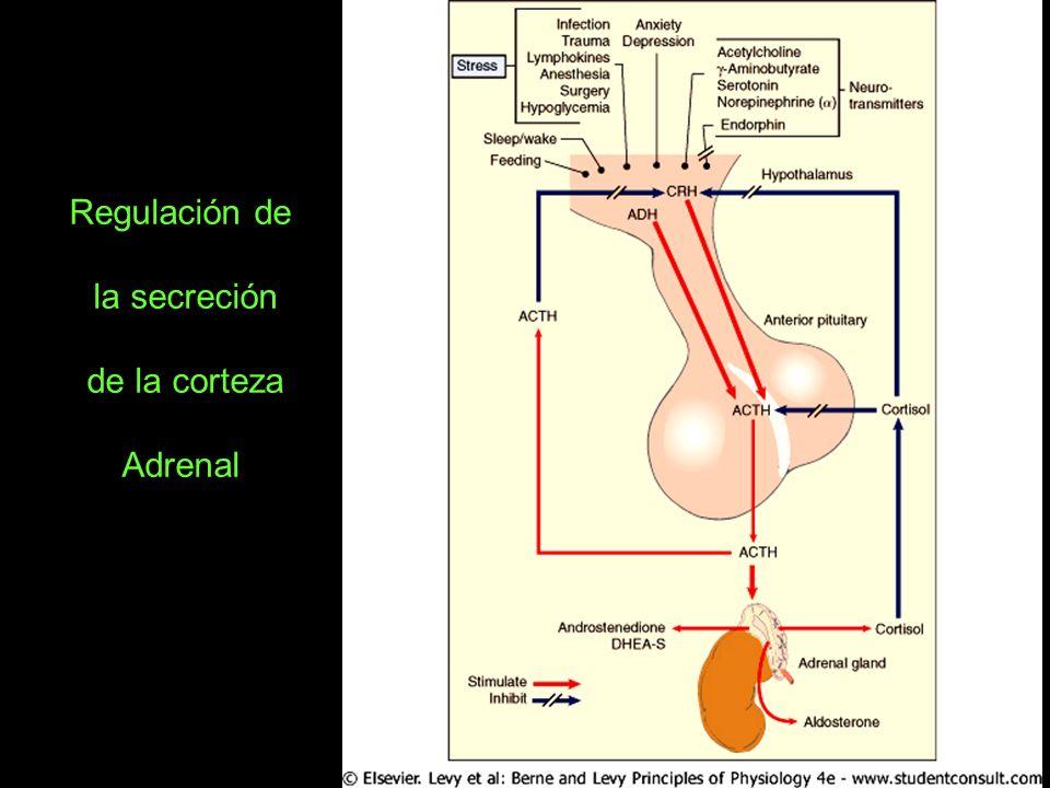 Regulación de la secreción de la corteza Adrenal