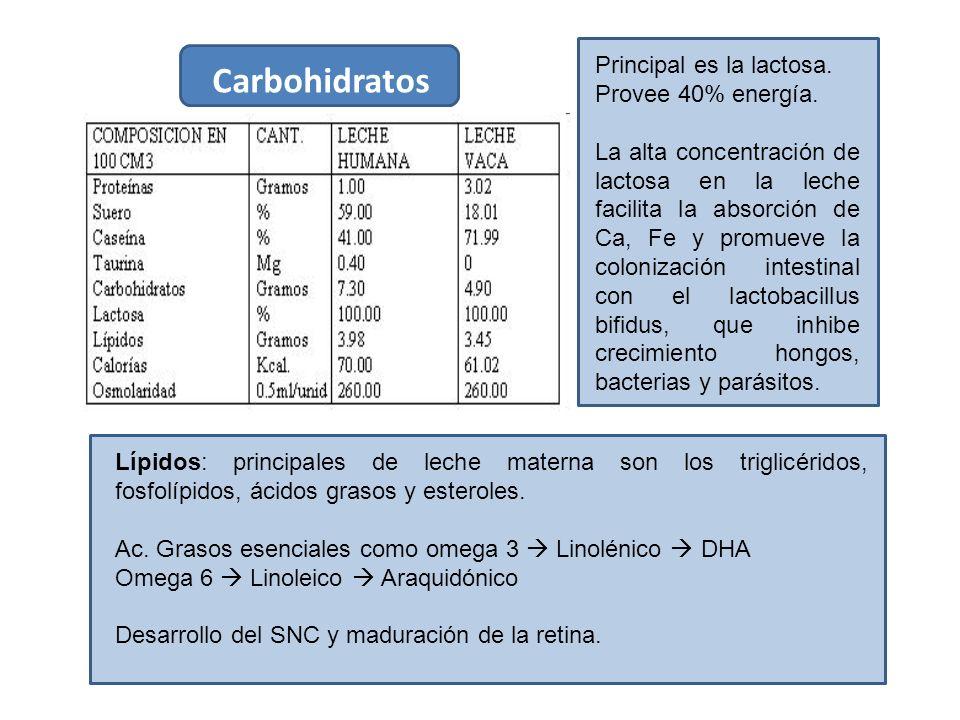 Composición de la leche materna. Proteínas están compuestas de 40% de caseína y 60% de proteínas del suero. Caseína: aporta aa, fosforo y Ca al RN. La