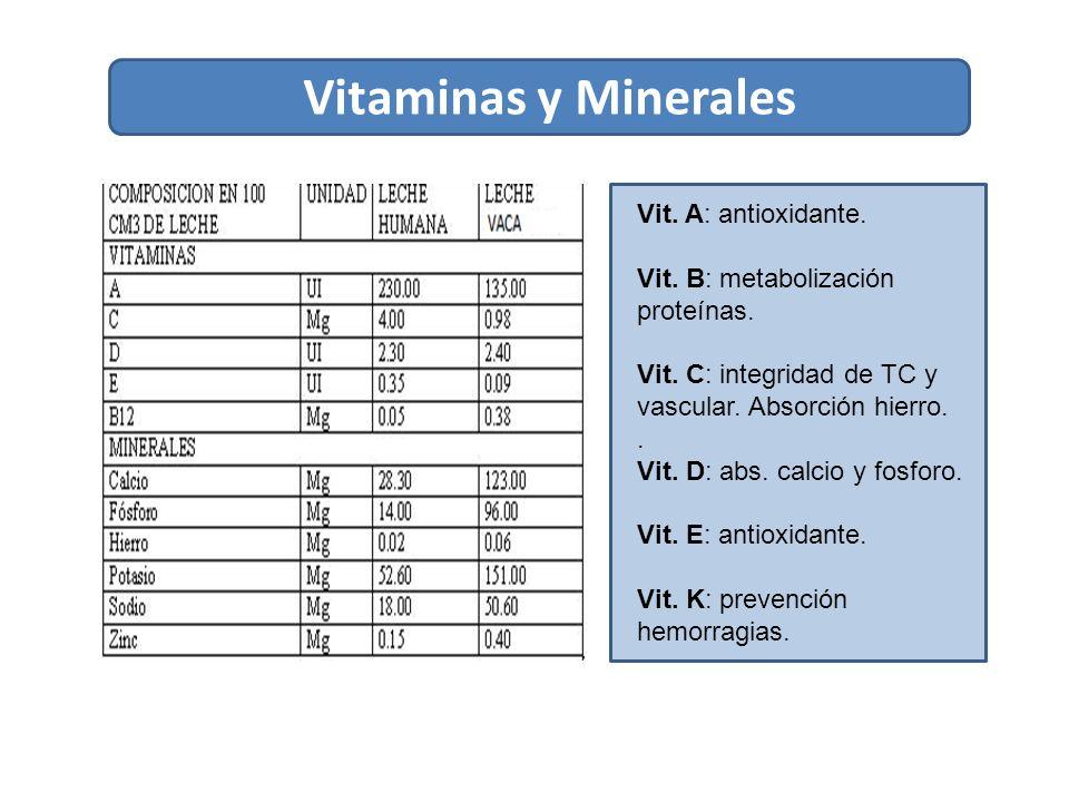 Vitaminas y Minerales Vit.A: antioxidante. Vit. B: metabolización proteínas.