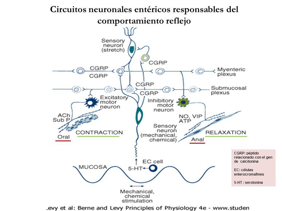 Circuitos neuronales entéricos responsables del comportamiento reflejo CGRP: péptido relacionado con el gen de calcitonina EC: células enterocromafine