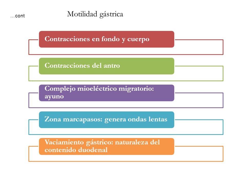 Contracciones en fondo y cuerpoContracciones del antro Complejo mioeléctrico migratorio: ayuno Zona marcapasos: genera ondas lentas Vaciamiento gástri