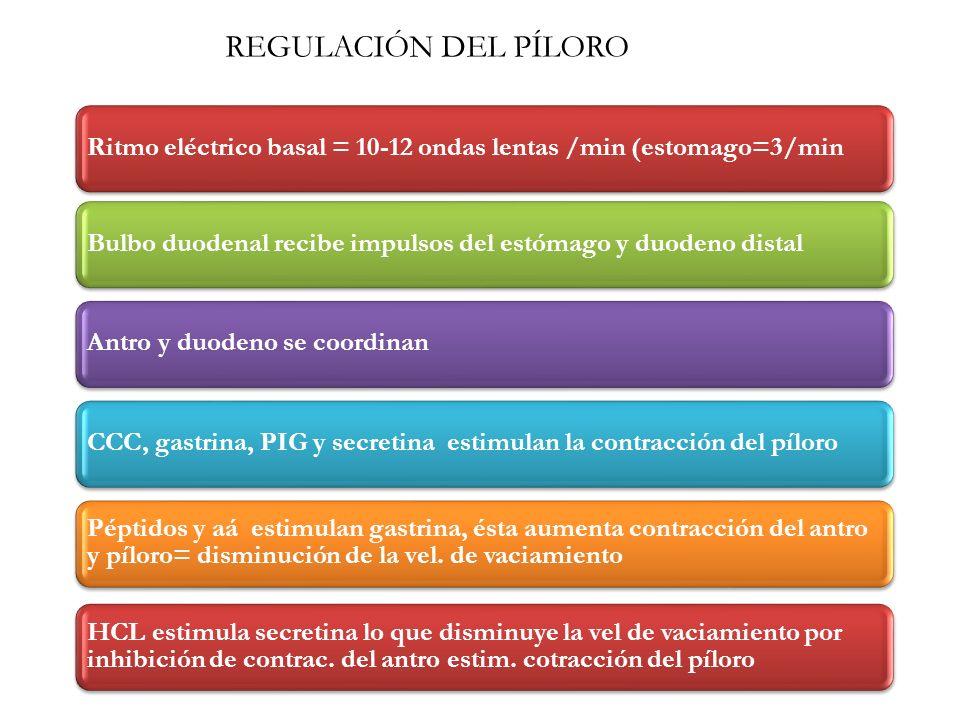 Ritmo eléctrico basal = 10-12 ondas lentas /min (estomago=3/minBulbo duodenal recibe impulsos del estómago y duodeno distalAntro y duodeno se coordina