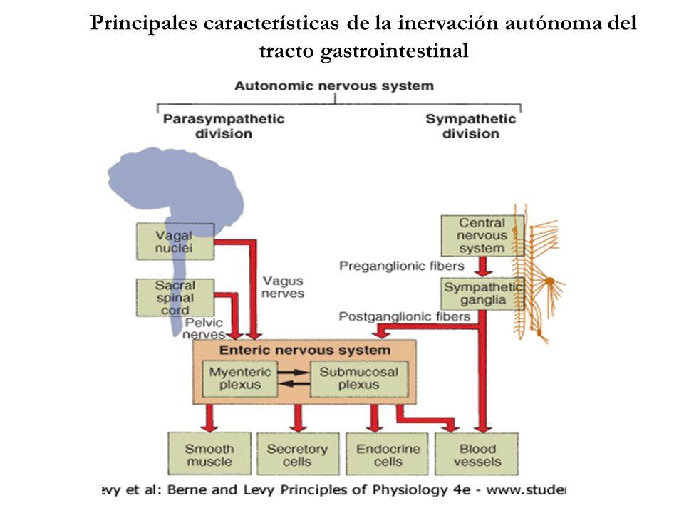 Principales características de la inervación autónoma del tracto gastrointestinal