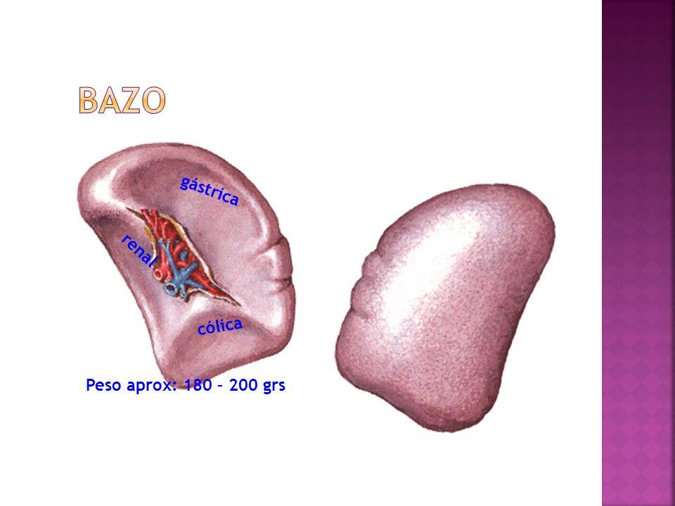 cólica gástrica renal Peso aprox: 180 – 200 grs