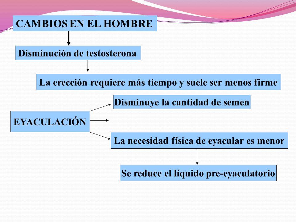 Disminución de testosterona CAMBIOS EN EL HOMBRE La erección requiere más tiempo y suele ser menos firme EYACULACIÓN Disminuye la cantidad de semen La