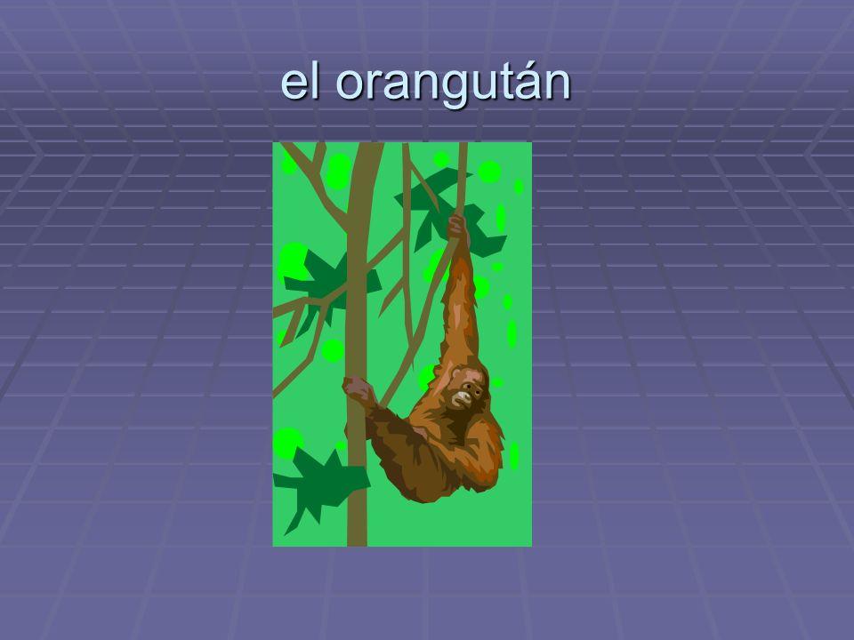 el orangután
