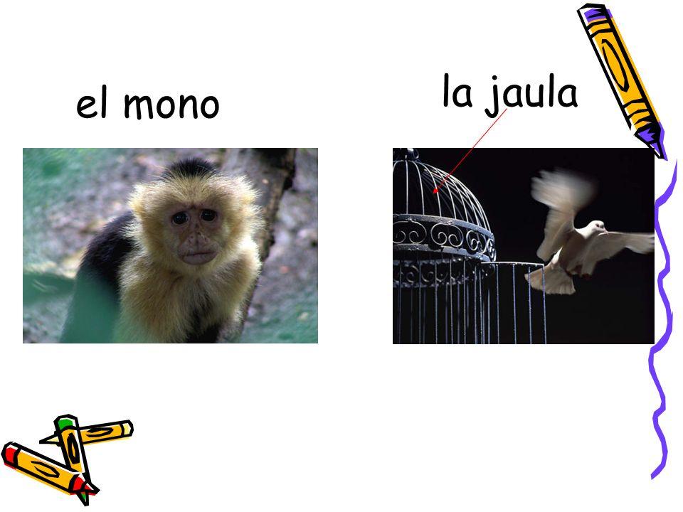 el mono la jaula