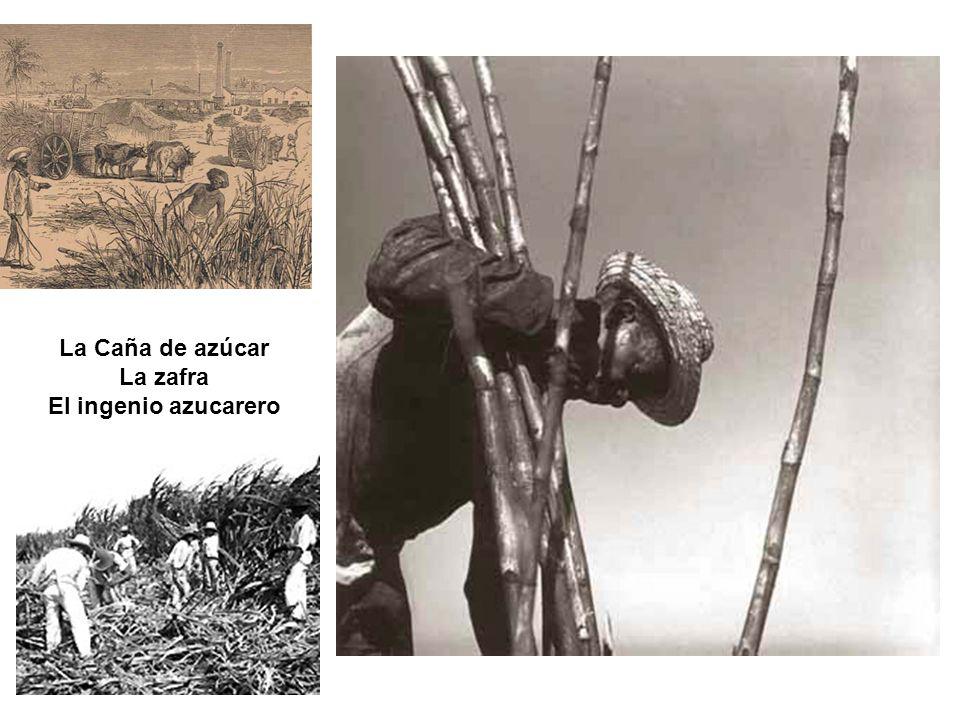 La Caña de azúcar La zafra El ingenio azucarero