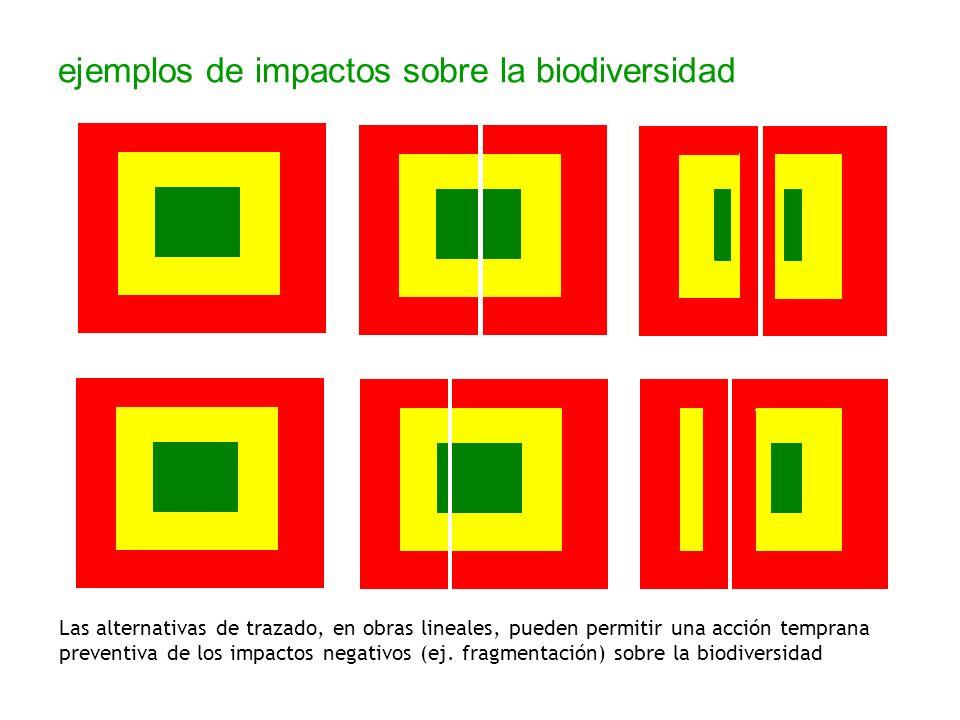 ejemplos de impactos sobre la biodiversidad Las alternativas de trazado, en obras lineales, pueden permitir una acción temprana preventiva de los impa