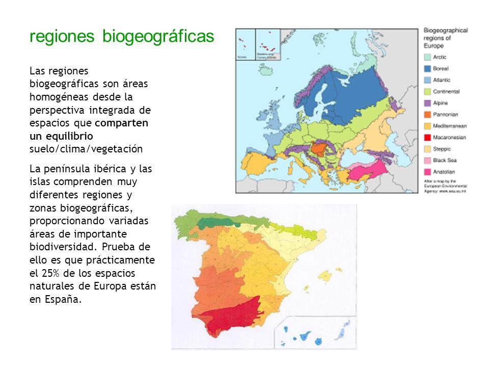 regiones biogeográficas Las regiones biogeográficas son áreas homogéneas desde la perspectiva integrada de espacios que comparten un equilibrio suelo/