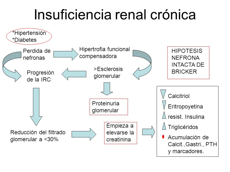 Insuficiencia renal crónica Perdida de nefronas Hipertrofia funcional compensadora Progresión de la IRC >Esclerosis glomerular HIPOTESIS NEFRONA INTAC