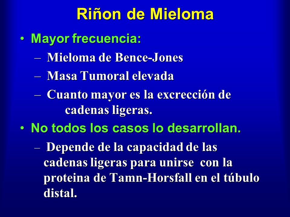 Riñon de Mieloma Mayor frecuencia:Mayor frecuencia: – Mieloma de Bence-Jones – Masa Tumoral elevada – Cuanto mayor es la excrección de cadenas ligeras