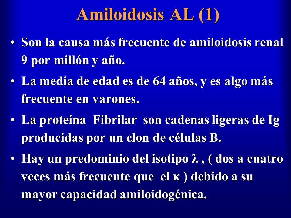 Amiloidosis AL (1) Son la causa más frecuente de amiloidosis renal 9 por millón y año.Son la causa más frecuente de amiloidosis renal 9 por millón y a