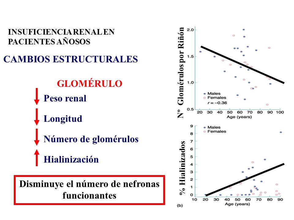INSUFICIENCIA RENAL EN PACIENTES AÑOSOS CAMBIOS ESTRUCTURALES Peso renal Longitud Número de glomérulos Hialinización GLOMÉRULO Disminuye el número de