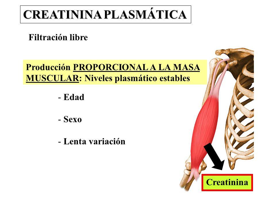 CREATININA PLASMÁTICA Filtración libre Producción PROPORCIONAL A LA MASA MUSCULAR: Niveles plasmático estables - Edad - Sexo - Lenta variación Creatin