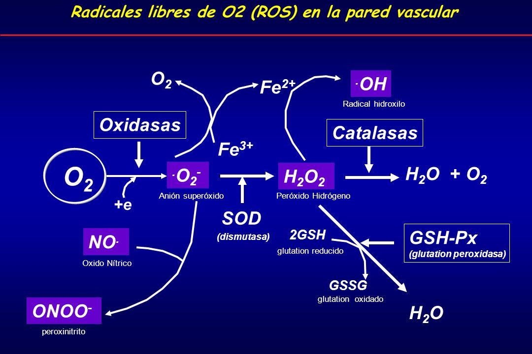.O2-.O2- H2O2H2O2 H 2 O + O 2 H2OH2O.OH O2O2 NO.