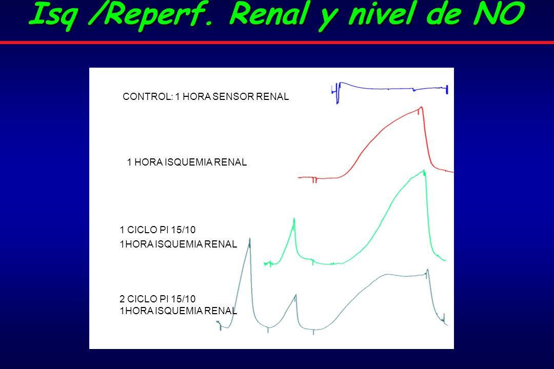 1 HORA ISQUEMIA RENAL CONTROL: 1 HORA SENSOR RENAL 1 CICLO PI 15/10 1HORA ISQUEMIA RENAL 2 CICLO PI 15/10 1HORA ISQUEMIA RENAL Isq /Reperf.