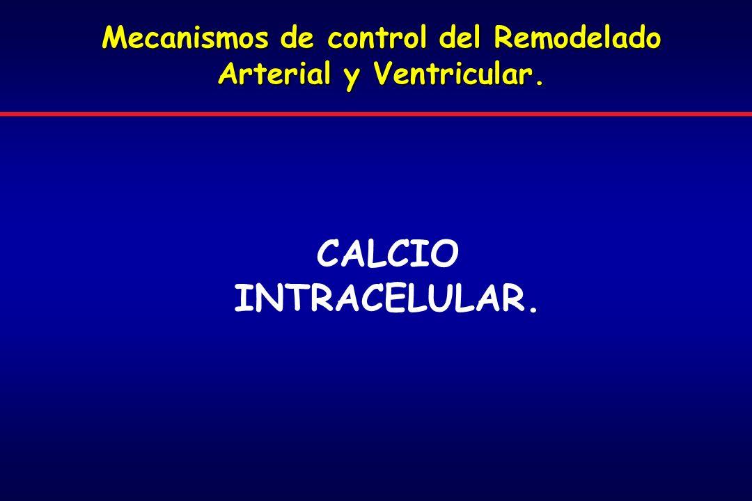 CALCIO INTRACELULAR. Mecanismos de control del Remodelado Arterial y Ventricular.