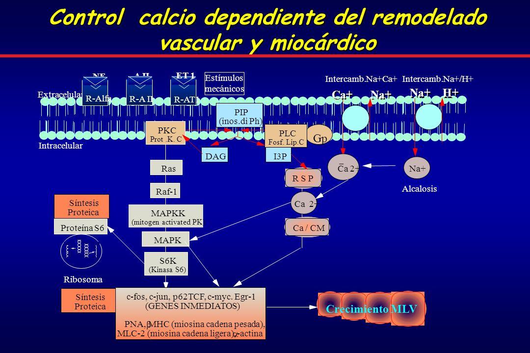 Extracelular Intracelular Gp PLC Fosf.Lip.C DAG PIP (inos.di Ph) PKC Prot.K.