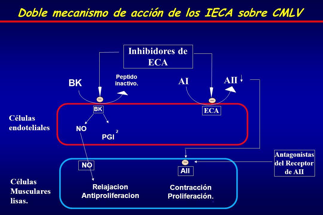 Doble mecanismo de acción de los IECA sobre CMLV Células Musculares lisas.