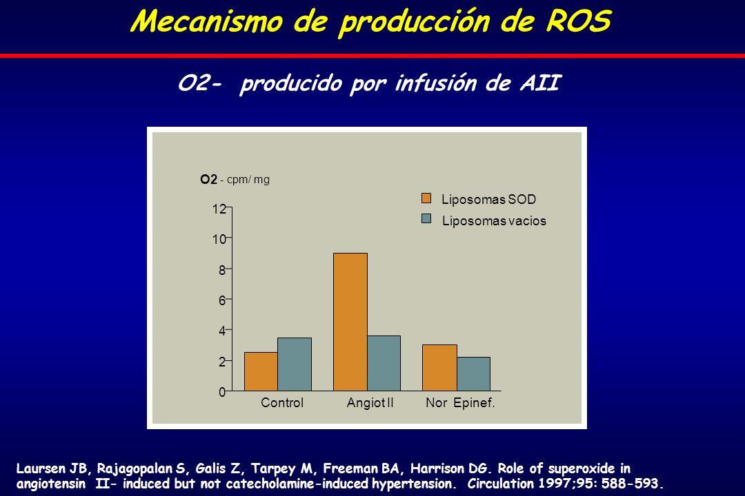O2- producido por infusión de AII Control Angiot IINor Epinef.