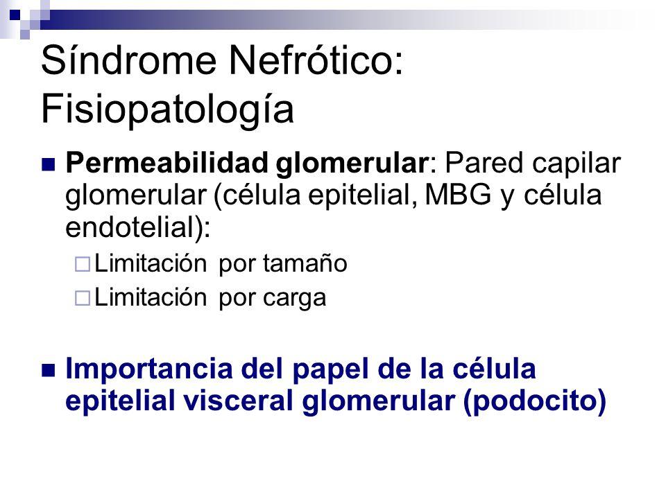 Síndrome Nefrótico: Fisiopatología Permeabilidad glomerular: Pared capilar glomerular (célula epitelial, MBG y célula endotelial): Limitación por tama