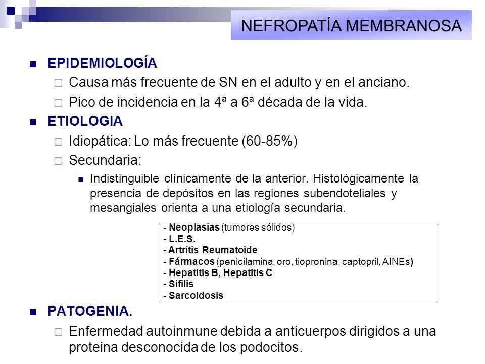 EPIDEMIOLOGÍA Causa más frecuente de SN en el adulto y en el anciano. Pico de incidencia en la 4ª a 6ª década de la vida. ETIOLOGIA Idiopática: Lo más