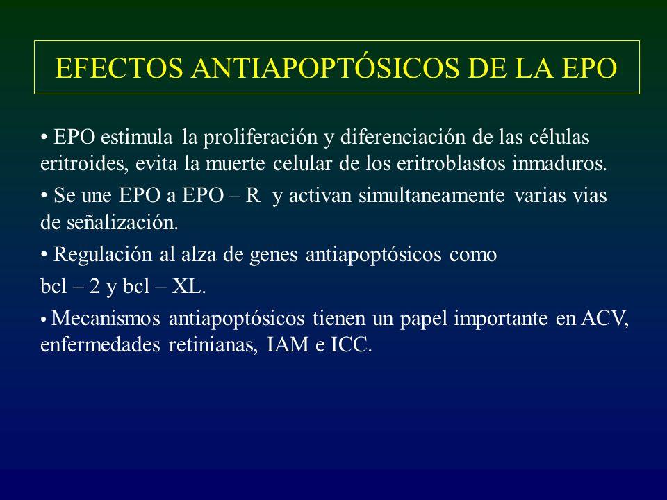 EFECTOS ANTIAPOPTÓSICOS DE LA EPO EPO estimula la proliferación y diferenciación de las células eritroides, evita la muerte celular de los eritroblast