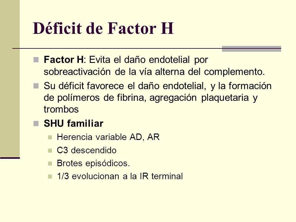 Déficit de Factor H Factor H: Evita el daño endotelial por sobreactivación de la vía alterna del complemento. Su déficit favorece el daño endotelial,