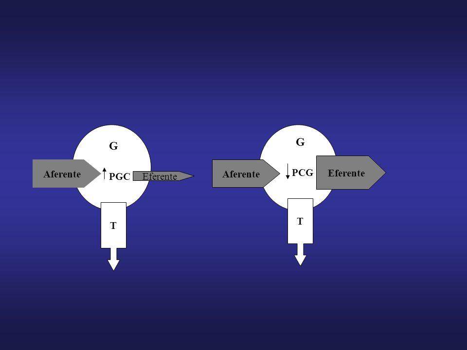 ANGIOTENSINA II bFGF, PDGF, HGF, IGF-I TGF-ß Nuclear Factor- B Metaloproteinasas Inhibidores de Metaloproteinasas Degradación de matriz extracelular Acúmulo de proteínas de matriz extracelular TNF, MCP-1 RANTES Moléculas de adhesión Infiltración celular en glomérulos e intersticio ESCLEROSIS GLOMERULAR E INTERSTICIAL
