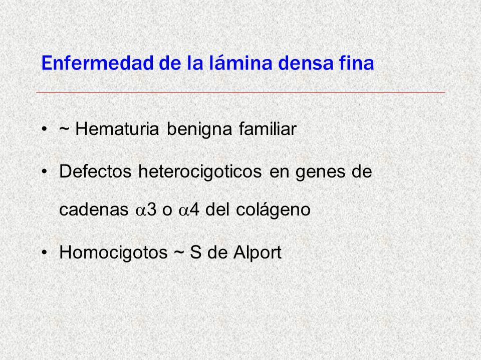 Enfermedad de la lámina densa fina ~ Hematuria benigna familiar Defectos heterocigoticos en genes de cadenas 3 o 4 del colágeno Homocigotos ~ S de Alp