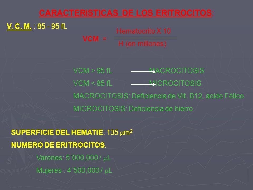 CARACTERISTICAS DE LOS ERITROCITOS: V. C. M. : 85 - 95 fL VCM = Hematocrito X 10 H (en millones) VCM > 95 fL MACROCITOSIS VCM < 85 fLMICROCITOSIS MACR