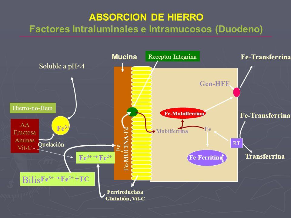 ABSORCION DE HIERRO Factores Intraluminales e Intramucosos (Duodeno) Fe 3+ Soluble a pH<4 Hierro-no-Hem AA Fructosa Aminas Vit-C Quelación Bilis: Fe 3