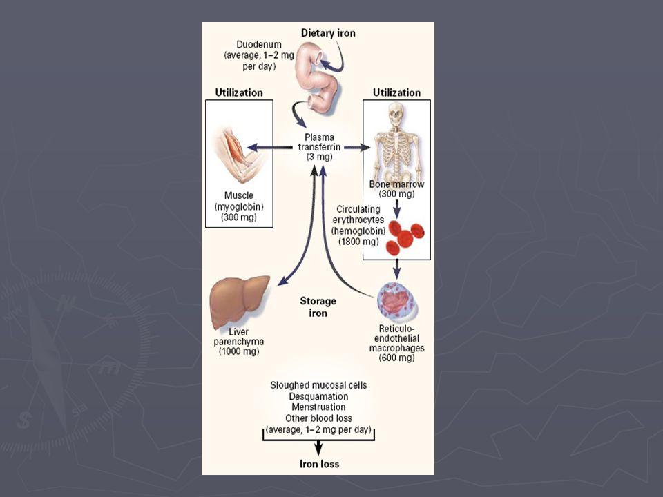Hierro de los eritrocitos Hierro de los G.R.