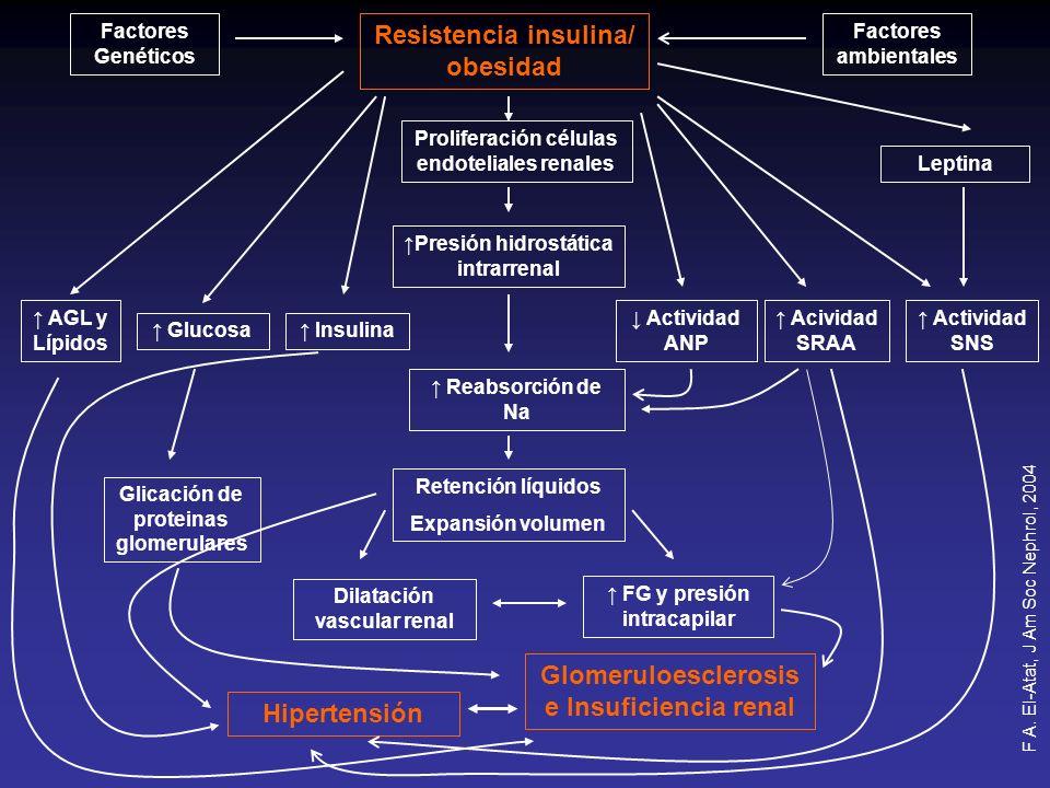 Factores Genéticos Resistencia insulina/ obesidad Factores ambientales Proliferación células endoteliales renales Leptina AGL y Lípidos Glucosa Insuli
