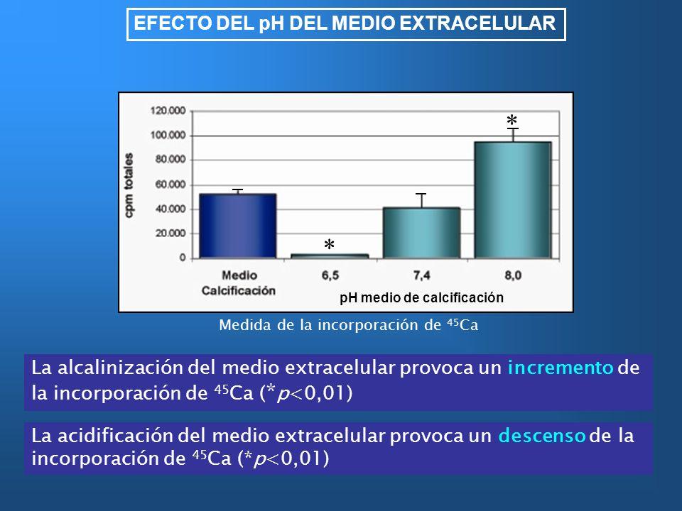EFECTO DEL pH DEL MEDIO EXTRACELULAR La alcalinización del medio extracelular provoca un incremento de la incorporación de 45 Ca ( * p<0,01) La acidif