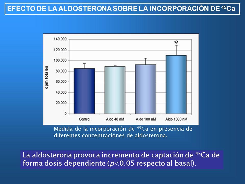 EFECTO DE LA ALDOSTERONA SOBRE LA INCORPORACIÓN DE 45 Ca La aldosterona provoca incremento de captación de 45 Ca de forma dosis dependiente (p<0.05 re