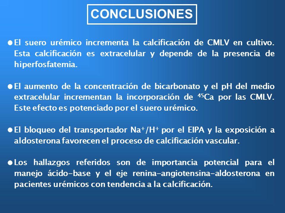 CONCLUSIONES El suero urémico incrementa la calcificación de CMLV en cultivo. Esta calcificación es extracelular y depende de la presencia de hiperfos