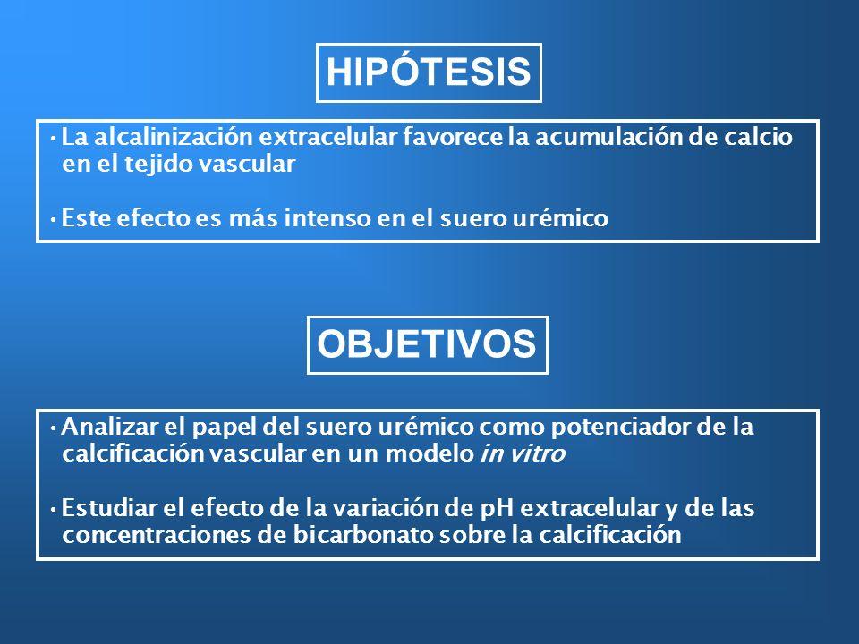 HIPÓTESIS Analizar el papel del suero urémico como potenciador de la calcificación vascular en un modelo in vitro Estudiar el efecto de la variación d
