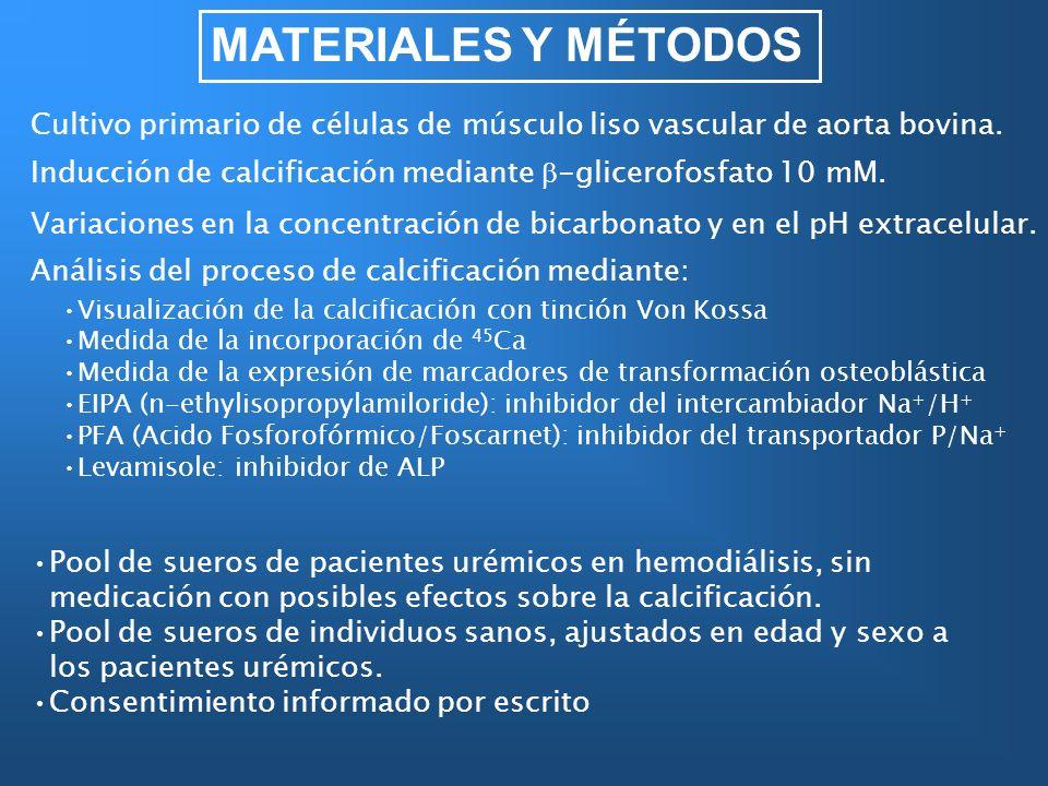 MATERIALES Y MÉTODOS Cultivo primario de células de músculo liso vascular de aorta bovina. Inducción de calcificación mediante -glicerofosfato 10 mM.