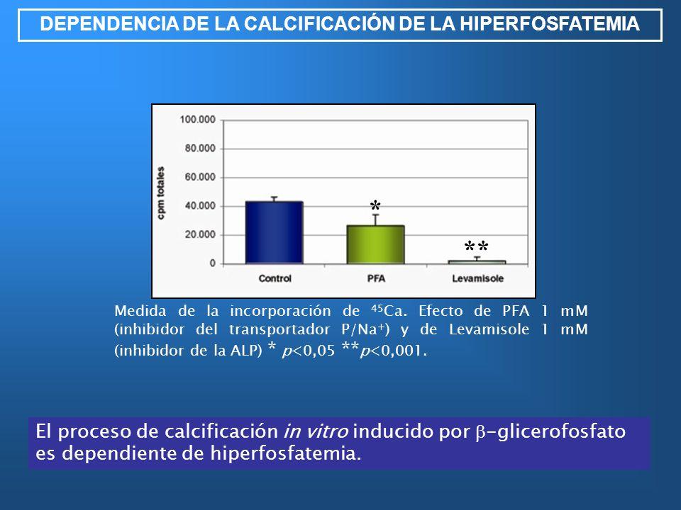 DEPENDENCIA DE LA CALCIFICACIÓN DE LA HIPERFOSFATEMIA Medida de la incorporación de 45 Ca. Efecto de PFA 1 mM (inhibidor del transportador P/Na + ) y