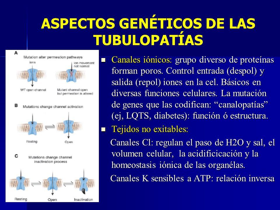 ASPECTOS GENÉTICOS DE LAS TUBULOPATÍAS Canales iónicos: grupo diverso de proteínas forman poros. Control entrada (despol) y salida (repol) iones en la