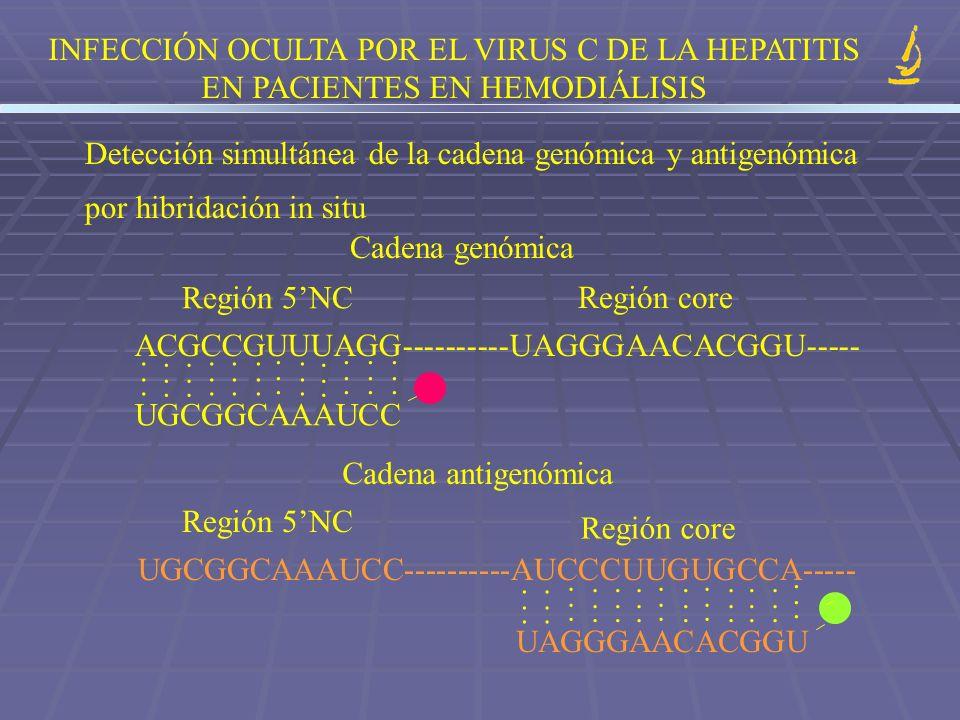 INFECCIÓN OCULTA POR EL VIRUS C DE LA HEPATITIS EN PACIENTES EN HEMODIÁLISIS Detección simultánea de la cadena genómica y antigenómica por hibridación