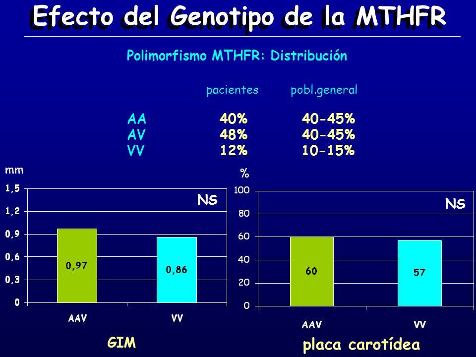 Efecto del Genotipo de la MTHFR mm % Polimorfismo MTHFR: Distribución AA AV VV 40% 48% 12% 40-45% 10-15% pacientes pobl.general NS GIM placa carotídea